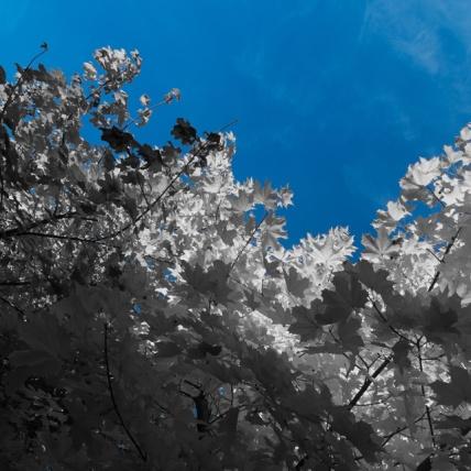 Autumn-Leaves-No-Colour