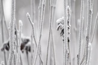 Frostiga Pinnar