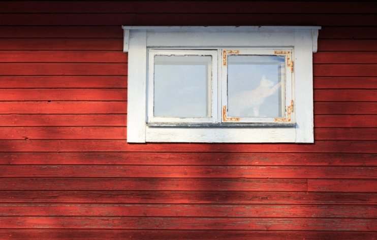 Cat in window. Red wooden wall.